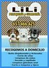 Peluquería y Guardería Canina Lili