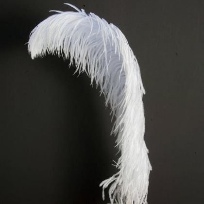 Venta de plumas de avestruz para la decoración de fiestas, trajes de carnaval y muchos otros
