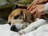 Técnica de masaje metamórfico para animales